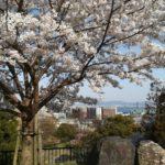 花見2020年関西3月上旬サクラが満開!穴場スポットとは?